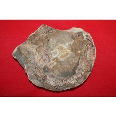 고생대,신생대전후의 물고기 화석